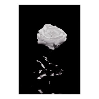 Black and White Beautiful Rose Close-up Poster