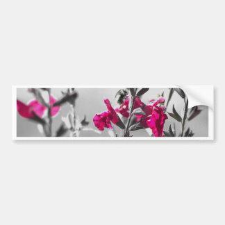 Black and White Bee Bumper Sticker