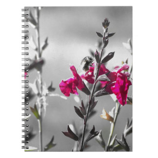 Black and White Bee Notebook