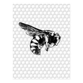 Black and White Bee Postcard
