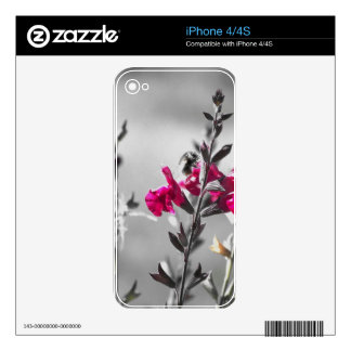 Black and White Bee Skin For iPhone 4