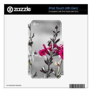 Black and White Bee Skins For iPod Touch 4G