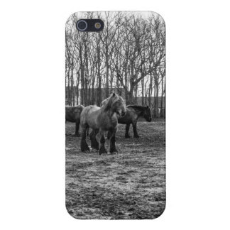 Black and White Belgian Horses In A Pasture Case For iPhone SE/5/5s