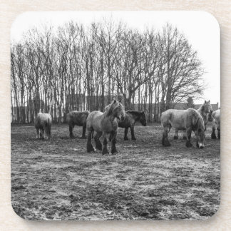 Black and White Belgian Horses In A Pasture Coaster