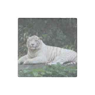 Black and White Bengal Tiger relaxed and smiling Stone Magnet