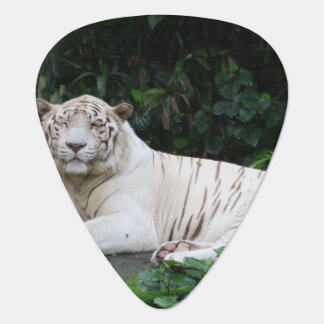 Black and White Bengal Tiger relaxed and smiling Guitar Pick