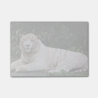 Black and White Bengal Tiger relaxed and smiling Post-it® Notes