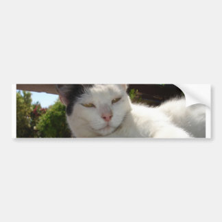 Black and White Bicolor Cat Lounging on A Park Ben Bumper Sticker