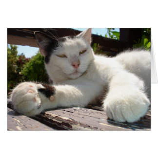 Black and White Bicolor Cat Lounging on A Park Ben Card