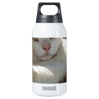 Black and White Bicolor Cat Lounging on A Park Ben Insulated Water Bottle