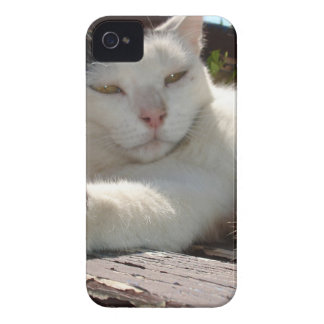 Black and White Bicolor Cat Lounging on A Park Ben iPhone 4 Case-Mate Case