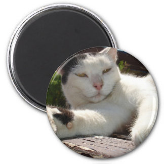 Black and White Bicolor Cat Lounging on A Park Ben Fridge Magnets