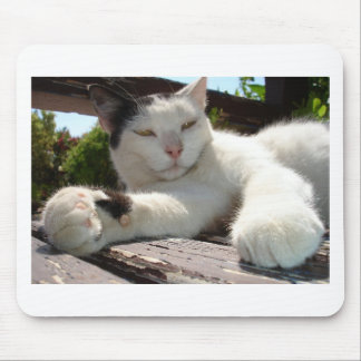 Black and White Bicolor Cat Lounging on A Park Ben Mouse Pad