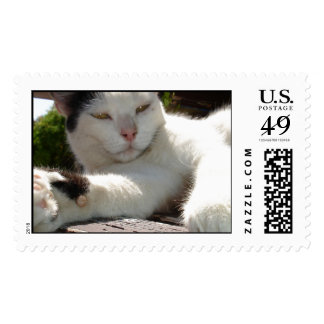 Black and White Bicolor Cat Lounging on A Park Ben Stamp
