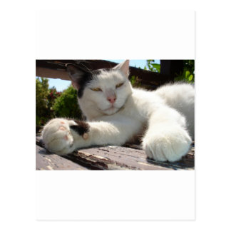 Black and White Bicolor Cat Lounging on A Park Ben Postcard