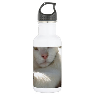 Black and White Bicolor Cat Lounging on A Park Ben Water Bottle