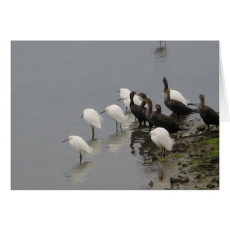 Black and White Birds at Wetlands Card