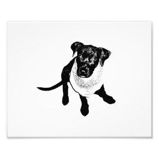 Black and White Black Lab Puppy image Photo Print