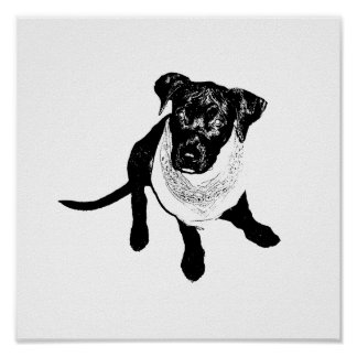 Black and White Black Lab Puppy image Poster