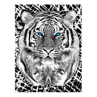 Black And White Blue Eyes wild Tiger face Postcard