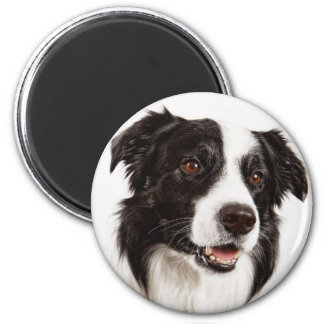 Black And White Border Collie Puppy Dog 2 Inch Round Magnet