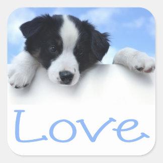 Black And White Border Collie Puppy Dog Blue Love Square Sticker