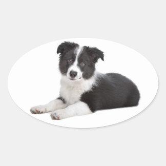 Black And White Border Collie Puppy Dog Oval Sticker