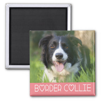 Black And White Border Collie Puppy Dog Pink 2 Inch Square Magnet