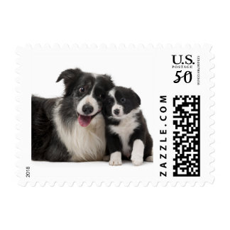 Black And White Border Collie Puppy Dog Postage