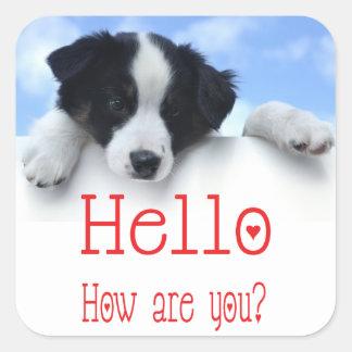 Black And White Border Collie Puppy Dog Red Hello Square Sticker