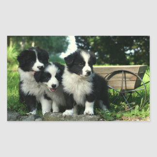 Black And White Border Collie Puppy Dogs Stickers