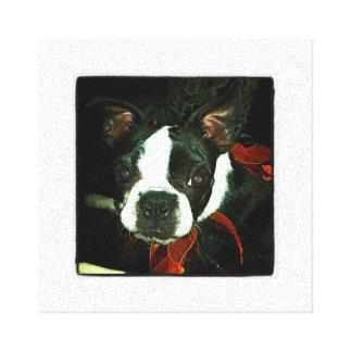 Black and White Boston Terrier Canvas Print