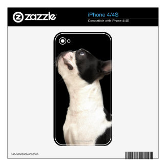 Black and white Boston Terrier looking up Decals For The iPhone 4