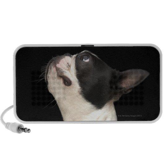 Black and white Boston Terrier looking up Mini Speaker