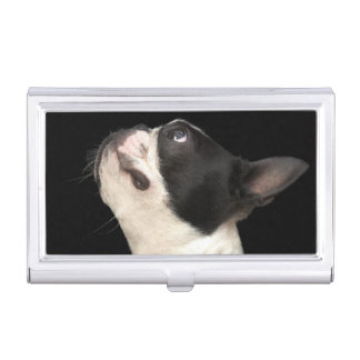 Black and white Boston Terrier looking up Business Card Holders