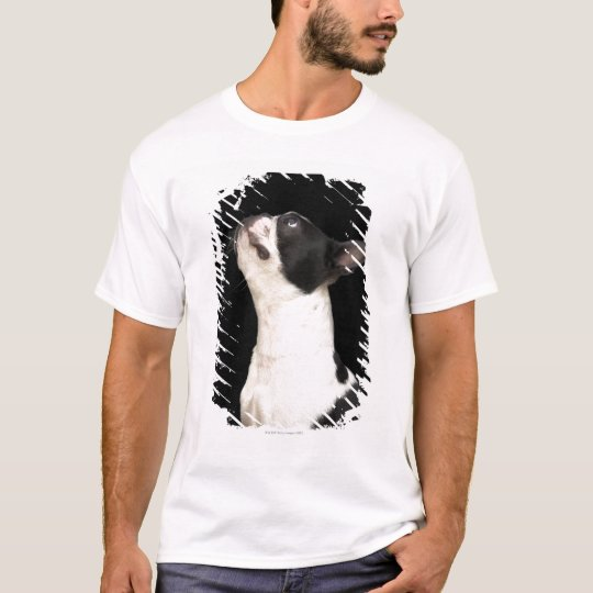 Black and white Boston Terrier looking up T-Shirt