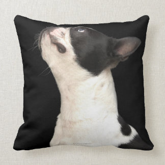 Black and white Boston Terrier looking up Throw Pillow
