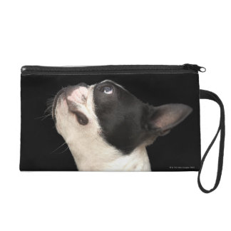 Black and white Boston Terrier looking up Wristlet Purse