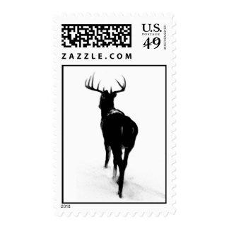 Black and White Buck Stamp