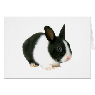Black and White Bunny Rabbit Easter Card