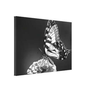 Black and White Butterfly Canvas