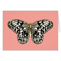 Black and white butterfly,coral pink background