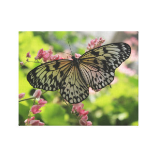 Black And White Butterfly On Pink Flower Canvas Print