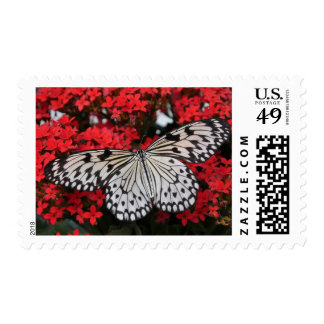 black and white butterfly on red flowers, girly postage