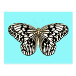 Black and white butterfly, turquoise background postcard
