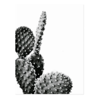 Black and White cactus black and blank Postcard