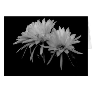 Black and White Cactus blooms Card