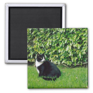 Black and White Cat 2 Inch Square Magnet
