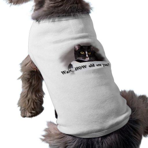 Black and white cat big yellow eyes dog t-shirt
