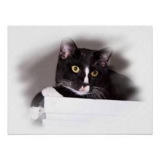 Black and white cat big yellow eyes looking right print